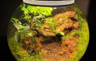 what-are-terrarium-plants